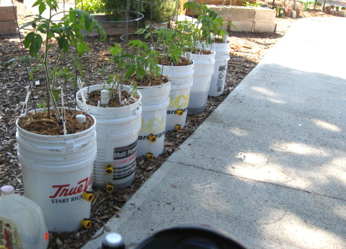 First buckets containers at Community Garden in 2010